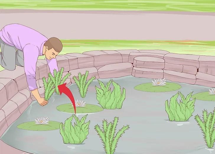 aid8789551-v4-728px-Clean-a-Pond-Step-13.jpg.jpg